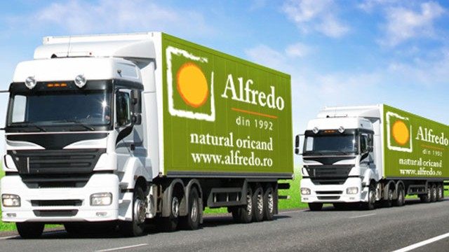ALFREDO-600