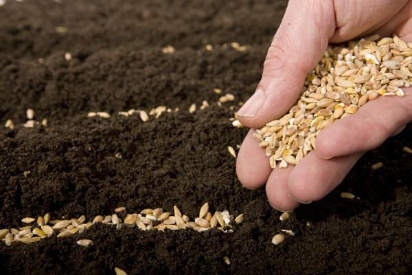 cultivare-seminte