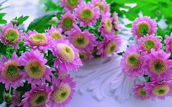 samurai-flowers